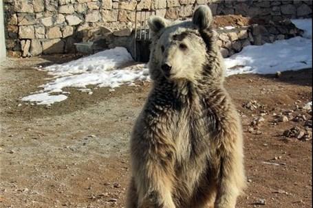 یکی از بهروز ترین باغوحشهای ایران در آستانه بهرهبرداری کامل