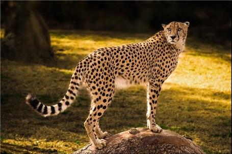 اینجا بهشت گربهسانان شرق کشور است