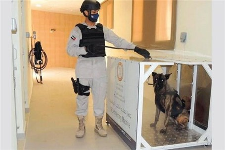بکارگیریِ سگهای کرونایاب در فرودگاه ابوظبی